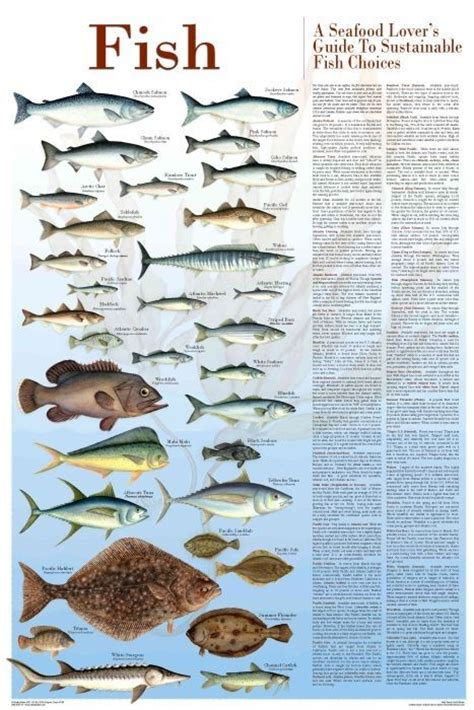 fish  seafood lovers guide  sustainable fish choices