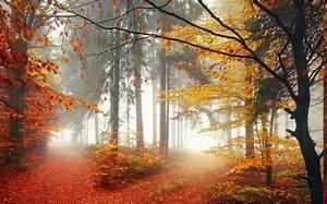 Mist, Landscape, Nature, Forest, Morning, Trees, Lights
