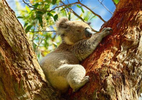 intimate wildlife   australia  zealand zicasso