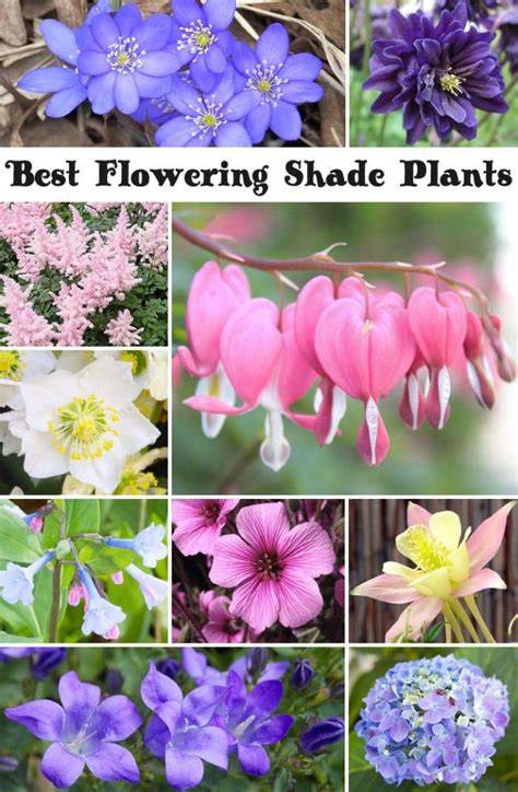 best plants for shade 1000 images about shade garden plants on pinterest hosta gardens shade plants and the shade
