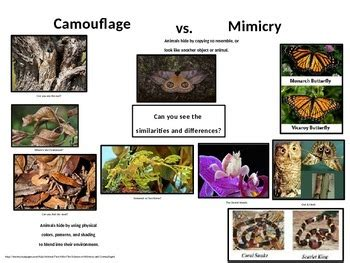 Camouflage Vs Mimicry By Teacher's Resource Menu Tpt