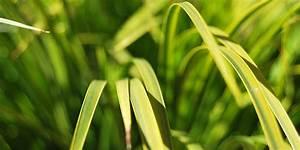 Gräser Für Den Garten : gr ser f r den garten sonne halbschatten schatten gartengestaltung ~ Sanjose-hotels-ca.com Haus und Dekorationen
