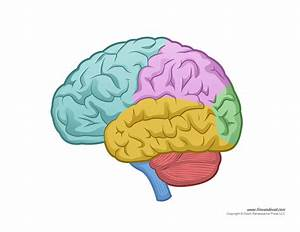 Brain Diagram - Blank - Color