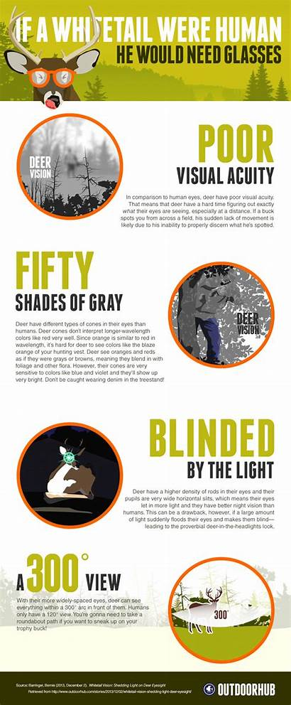 Deer Infographic Eyesight Whitetail Hunting Vision Works