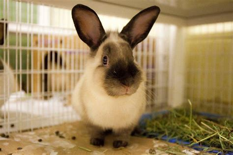 rabbits ready  rescue  nyc shelters  ban