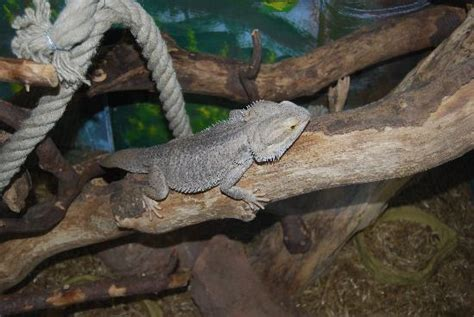 Bearded Bedding by Macaw Picture Of Tropical World Leeds Tripadvisor