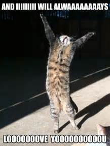 cat memes 25 animal memes to make you laugh till you drop