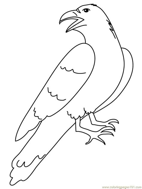 crow luking  coloring page  crow coloring pages