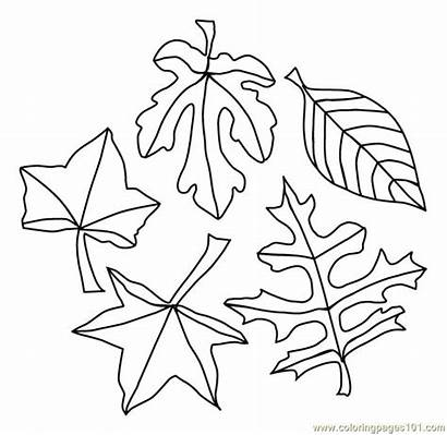 Coloring Leaves Pages Autumn Coloringpages101 Pdf