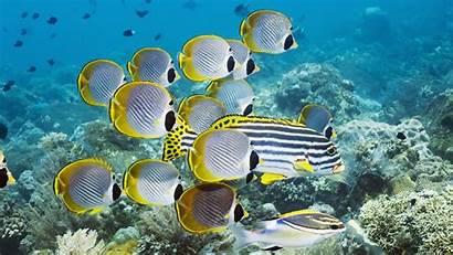 Underwater Fish Ocean Wallpapers Coral Swim Pixelstalk