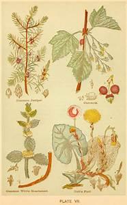 poppy seed laudanum