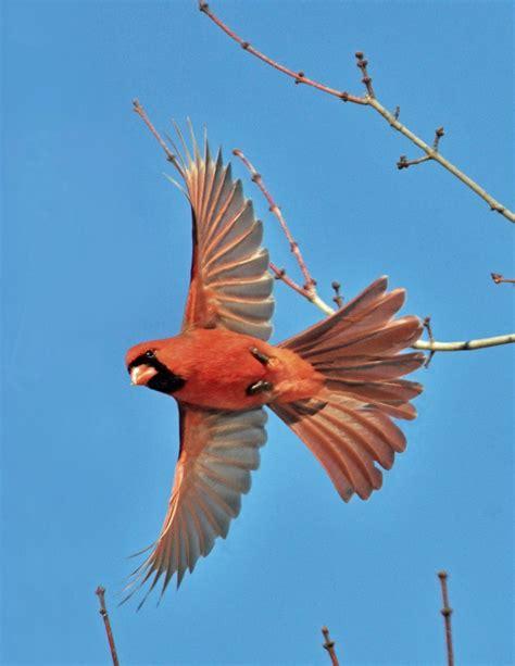 prevent birds flying  windows effective wildlife