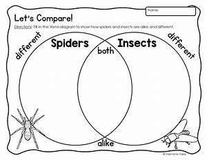 Spider Unit For Kindergarten And First Grade