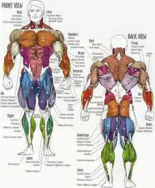 Roman Chair Sit Ups Muscles by Fitness Avenue Your Daily Dose Of Wellness Info Muscle