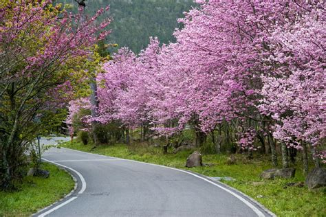 Wuling Backgrounds by Beautiful Wuling Farm Taiwan Stock Photo Image Of