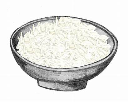 Rice Clipart Steamed Transparent Webstockreview Gmos Issues