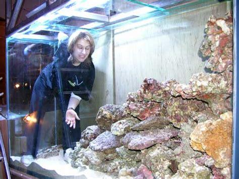 aquarium eau de mer froide d 233 coration aquarium eau de mer