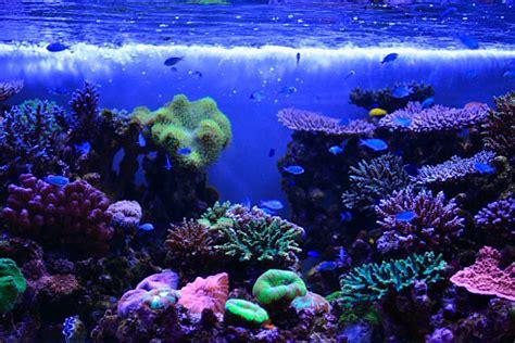 水族館のサンゴ