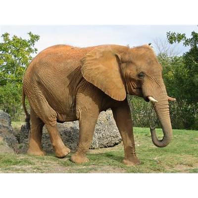 African ElephantSome True Facts & Fresh Photos