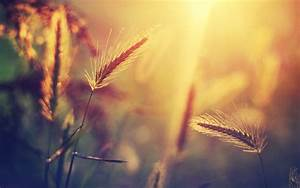 Nature, Closeup, Blurred, Sunset, Wallpapers, Hd, Desktop