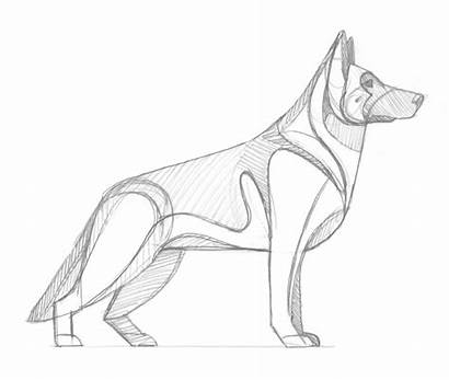 Shepherd German Drawing Sketch Dog Sketches Dogs