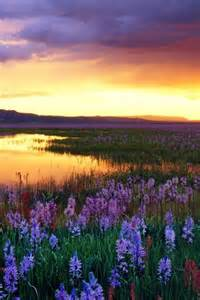 Beautiful Flower Fields Sunset