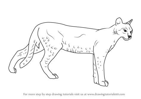 learn   draw  african golden cat wild animals step