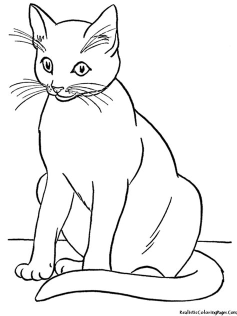 realistic coloring pages  cats realistic coloring pages