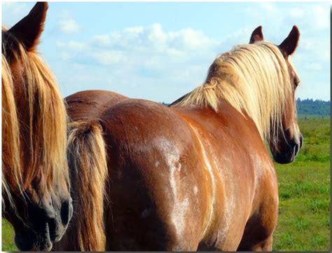 vetkampagne tierarztshop bei hautkrankheiten wie