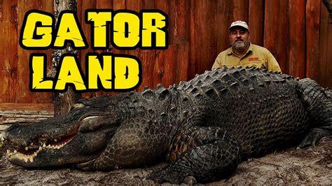 rare giant alligators  gatorland orlando zoo jay