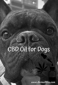 Fish Oil Dosage Chart Cbd Oil For Dogs Guidelines And Dosage Guide