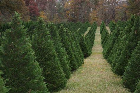 oregon christmas tree growers tree farm portland oregon beneconnoi