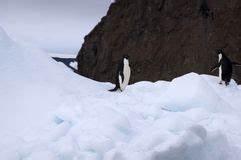 Pingouin Sur La Banquise : pingouin sur une banquise illustration de vecteur illustration du vecteur 117161943 ~ Melissatoandfro.com Idées de Décoration