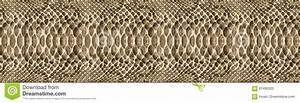 Snake Skin Pattern Texture Repeating Seamless. Vector ...