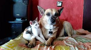 Love Story Between A Dog And A Cat - TheOrphanPet