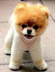 Best Bear Puppy Ideas And Images On Bing Find What Youll Love