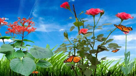 Animated Beautiful Wallpaper - morning flower animated wallpaper http www