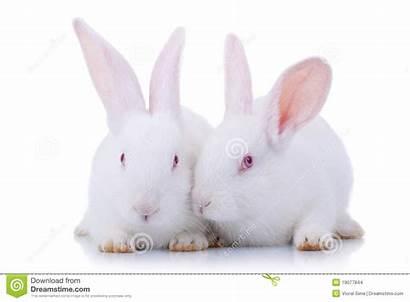 Rabbits Twee Leuke Witte Conigli Bambino Svegli