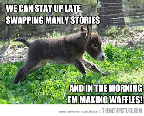 Donkey Memes - 35 most funniest donkey meme pictures and photos