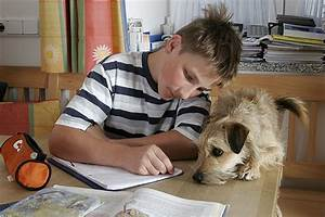Haustiere Für Kinder : haustiere f r kinder welches tier passt ~ Orissabook.com Haus und Dekorationen