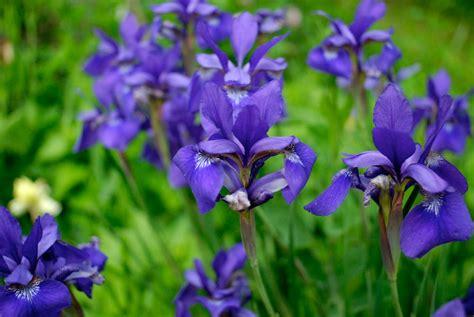 perennial plant care tend perennial plant sale care