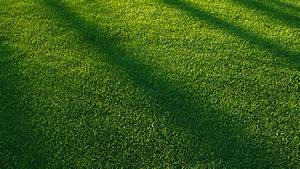 vj85-lawn-grass-sunlight-green-pattern - Papers co