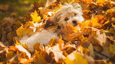 Autumn Animal Wallpaper - fall animal wallpaper 65 images