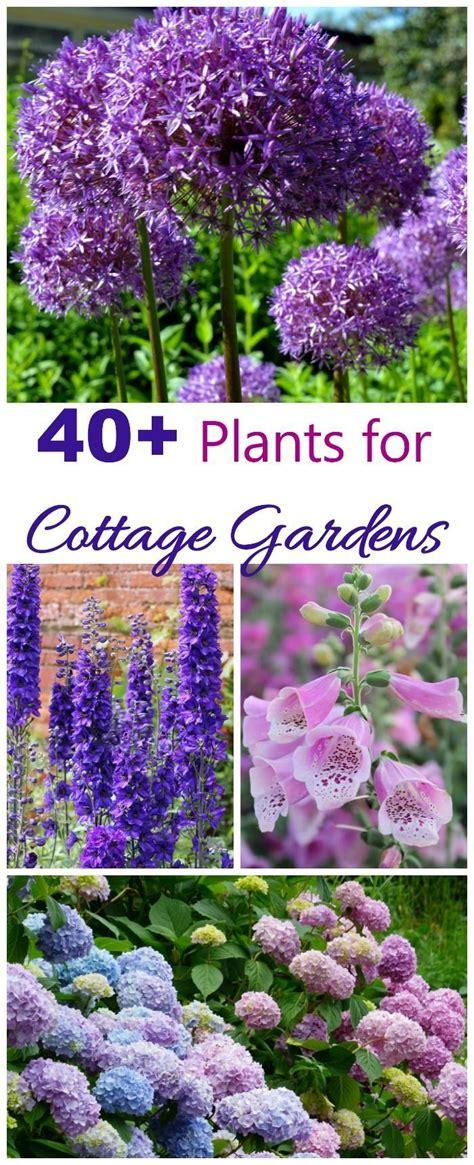 Cottage Garten Pflanzen by Best 25 Cottage Garden Plants Ideas On