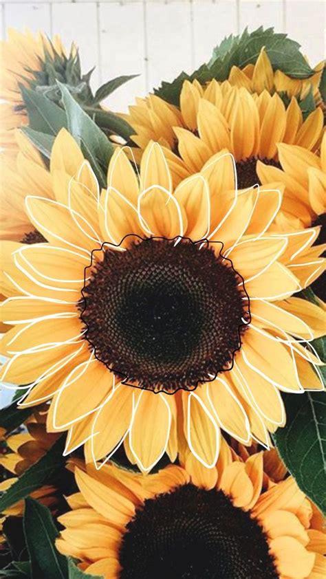 sunflower sunflower iphone wallpaper sunflower