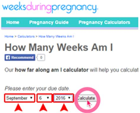 weeks pregnant calculator pictures pin pinterest pinsdaddy