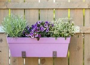Blumen Für Den Balkon : balkonpflanzen f r jede saison ~ Lizthompson.info Haus und Dekorationen