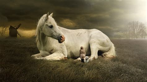 horse fantasy  wallpapers hd wallpapers id