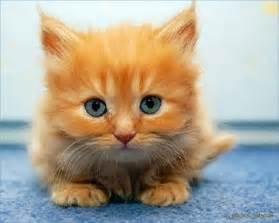 Résultat d'images pour chat blanc mignon