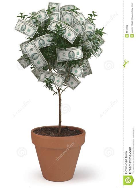 baum mit geld geld baum stockfoto bild r 252 ckkehr wohlstand geld 1143230